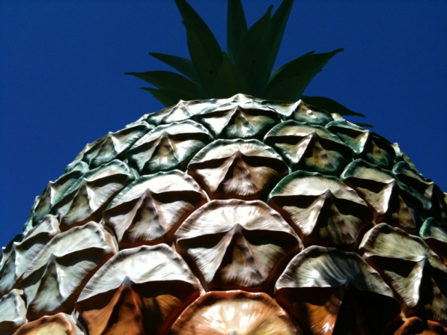 A big pineapple of the past (photo by Tseen Khoo)